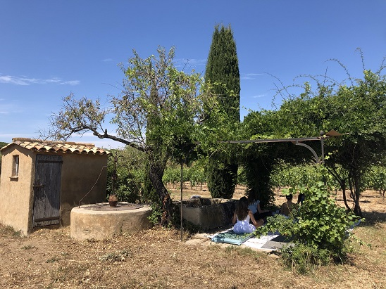 Yoga in the vineyards of Saint-Tropez, Provence